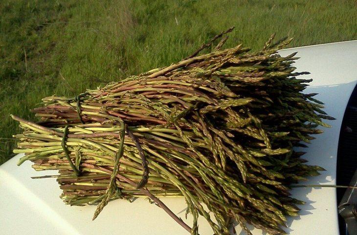 Le numerose proprietà degli asparagi selvatici: prelibati, antidepressivi, energetici, riducono la cellulite e depurano