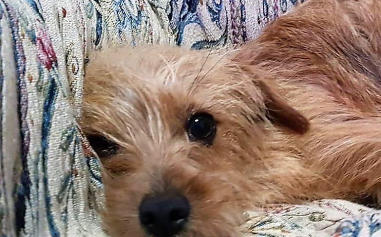Ritrovata sola e spaventata l'8 marzo a Cagliari: dolcissima cagnolina cerca una famiglia