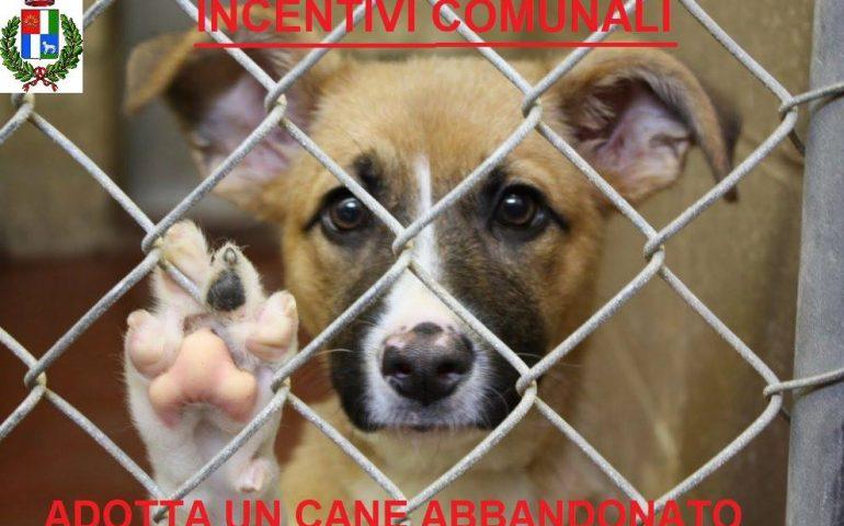Mandas: contributi annui a chi adotterà un cane dal canile convenzionato