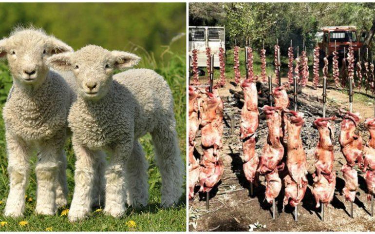 """La Pasqua e la strage degli agnelli: """"Terribile contraddizione tra gli ideali cristiani e l'opera di sterminio terrena"""""""
