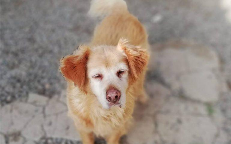 Sally, 8 anni di canile: anziana e dolcissima. In cerca urgente di una casa