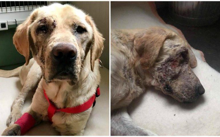 Teo: quel che resta di un cane. Trovato in fin di vita malato sul ciglio della strada, ha bisogno di cure e di una casa