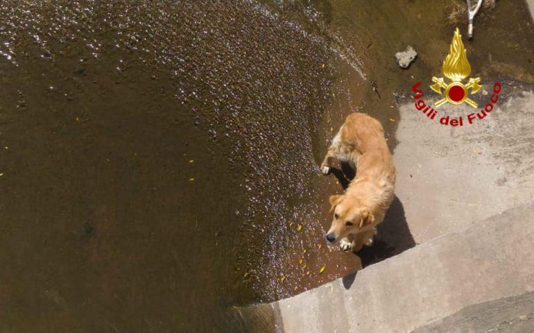 Cane salvato dai Vigili del Fuoco: era caduto in un canale di scolo a Villaspeciosa