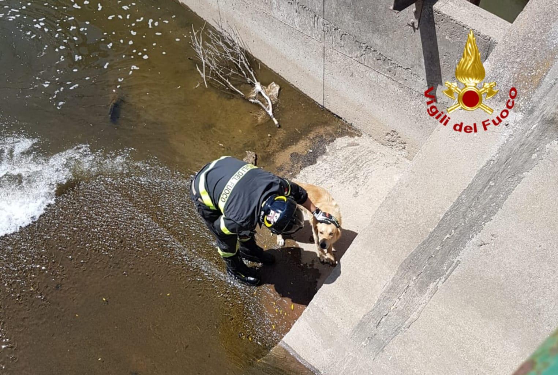 cane caduto nel canale salvato dai vigili del fuoco