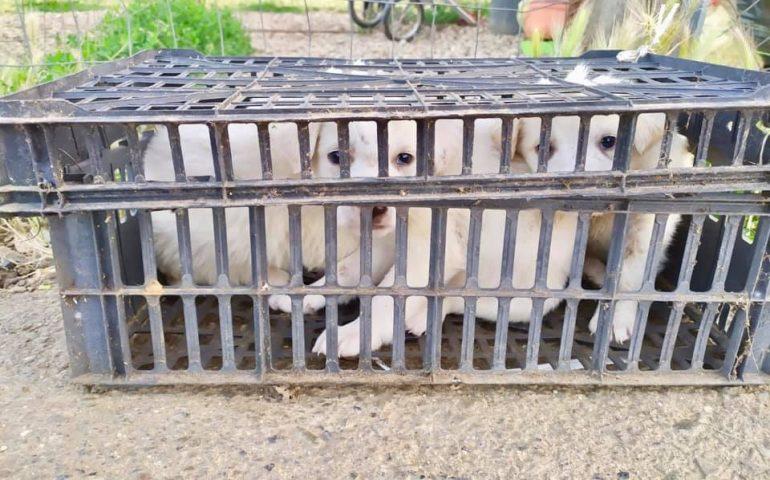 Imprigionati in una cassetta, pieni di morsi e terrorizzati. Abbandonati di fronte al rifugio Amici degli Animali
