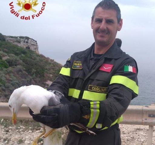 Cagliari, gabbiano finisce in una canna fumaria: salvato dai Vigili del Fuoco