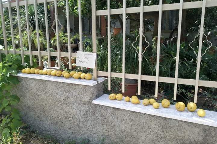 """La foto del giorno: generosità a Villacidro, """"per i limoni servitevi"""""""