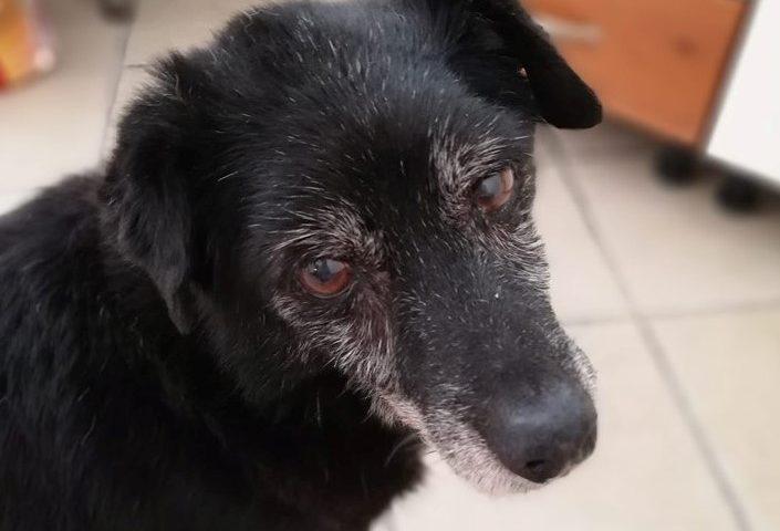Adottare un cane anziano: l'amore, la fedeltà e la riconoscenza eterna in uno sguardo