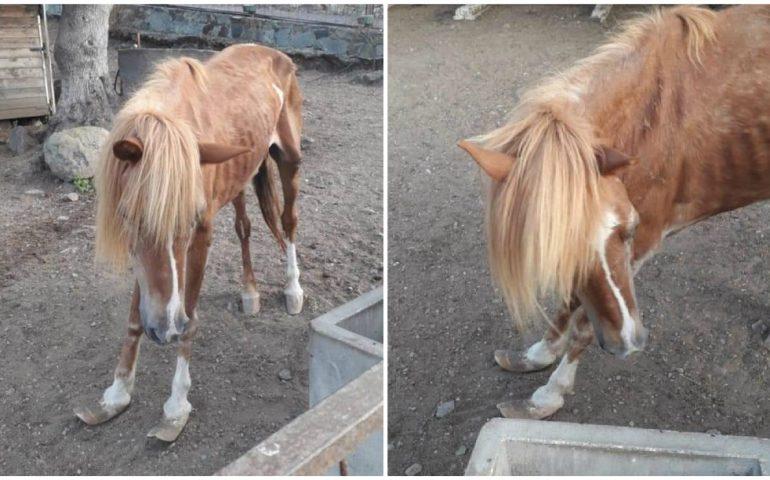 Sarroch: cavalli in stato di denutrizione e abbandono al parco comunale. La denuncia