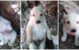 cuccioli quartu