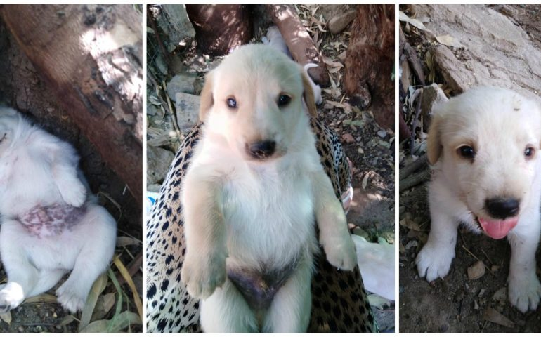 Abbandonati come spazzatura a Quartucciu: 7 cuccioli in cerca di casa