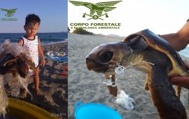 Bambino salva una tartaruga a Villaputzu