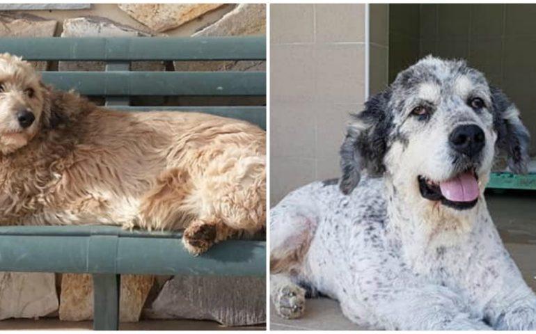 Willy e Lion: morti in canile in attesa di amore