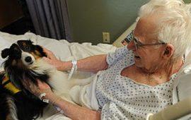 Cani e gatti in ospedale con i loro amici degenti