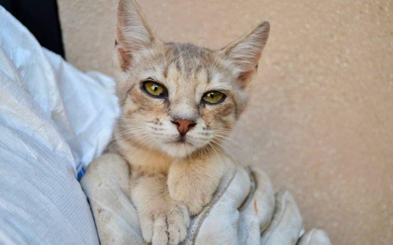 """I """"gattini di carta"""": 8 micetti abbandonati, soli e malati, in cerca urgente di casa o stallo"""