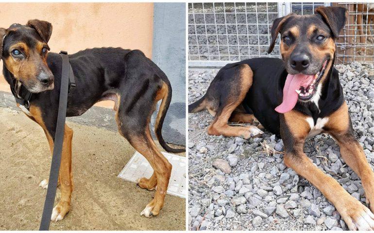 Geppetto, 16 anni, prima e dopo. Lanciato dentro al rifugio, cieco e scheletrico. Si cerca adozione del cuore