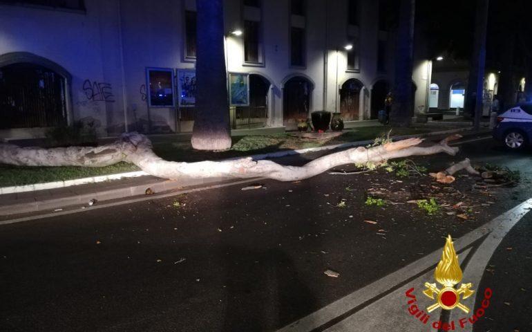 Oristano, un ramo di sette metri si stacca da un albero in piazza Roma e cade in strada