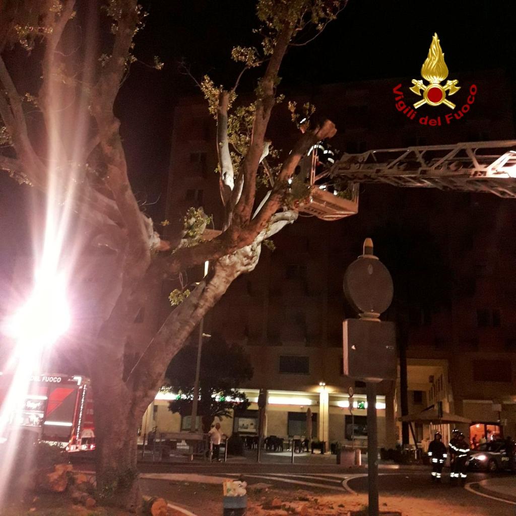 Ramo di un albero caduto in piazza Roma a Oristano