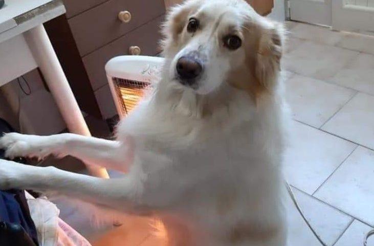 Orfano del suo papà umano, Snoopy cerca una nuova casa