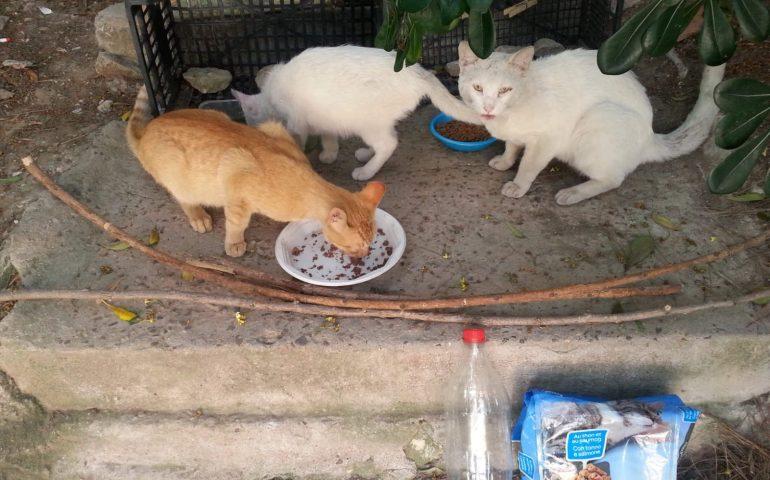 Gatti randagi a San Michele: «Temo per loro, hanno minacciato di avvelenarli», la denuncia di un volontario