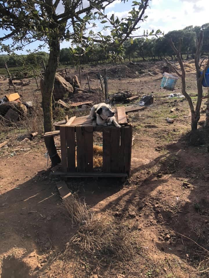 Gesturi: cani maltrattati in un terreno, intervengono i Carabinieri la Asl