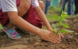 Bambina pianta un albero
