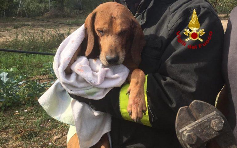Villamassargia: un cane resta incastrato con la testa in un'inferriata. Liberato dai Vigili del Fuoco