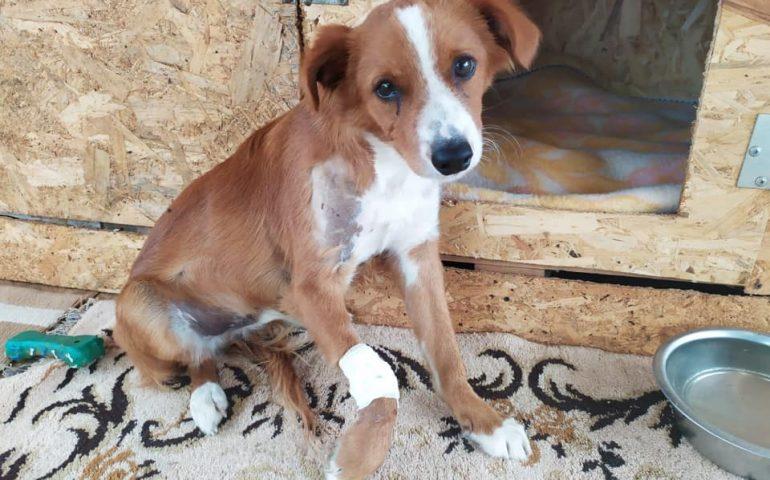 Tommaso, il cane che non contava nulla: un proiettile nel collo e una zampetta che forse non potrà più tornare a camminare