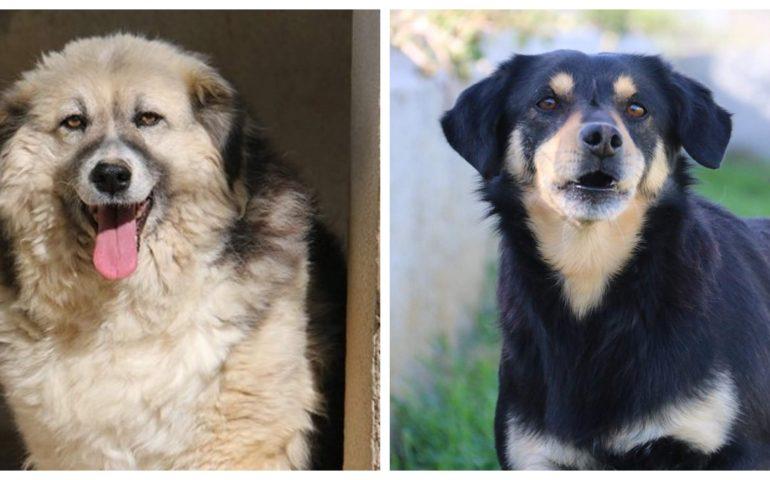 """Benny e Perla: due """"invisibili"""". Lei, la più anziana del canile, lui timido e buono come un angelo"""