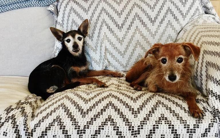 La bella notizia del giorno: Flora e Fauna, micro vecchiette 16enni, sono state adottate!