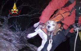 Cane cade in un dirupo e viene salvato dai Vigili dle Fuoco