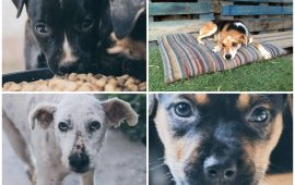 happy-bau-cani-collage