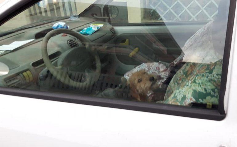 """Pirri, denuncia animalisti: """"cane chiuso in auto"""". Il proprietario lo riporta a casa dopo l'intervento della Municipale"""