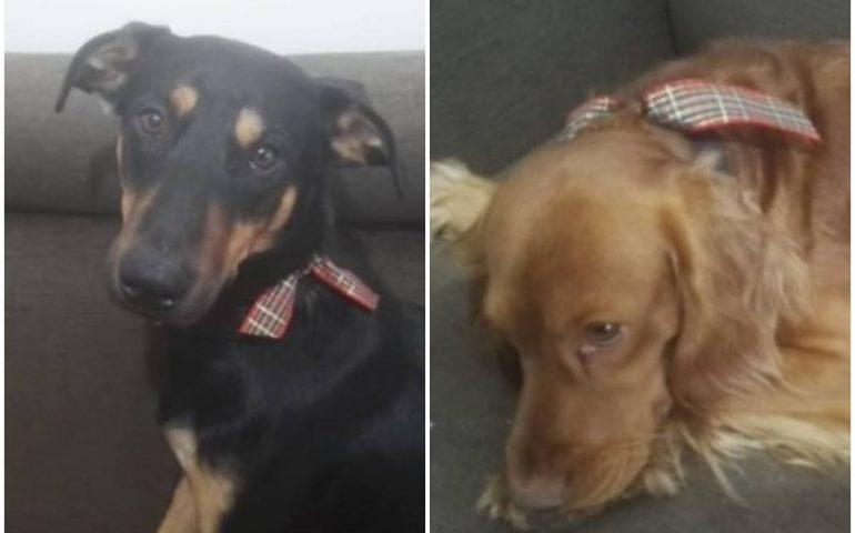 Due cani scomparsi a Elmas: di loro più nessuna notizia da giorni, la famiglia è disperata