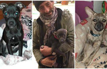 cuccioli e senzatetto