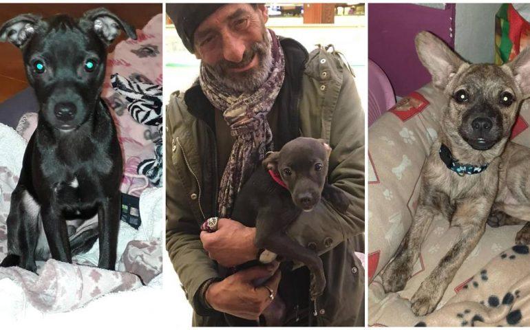 Cuccioli salvati da un senzatetto dal cuore d'oro a Cagliari, cercano con urgenza una casa