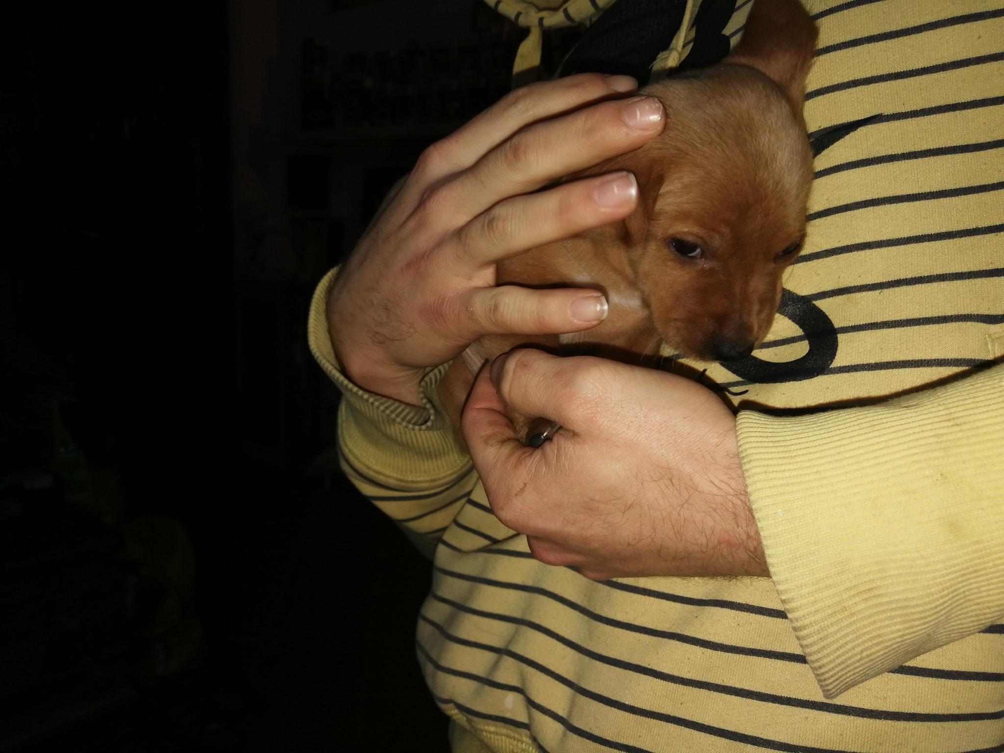 cucciolino