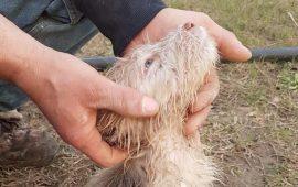 cucciolo gettato nel canale