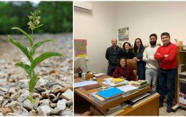 Orchidee nelle discariche minerarie, lo studio dell'Ateneo di Cagliari piace alla comunità scientifica internazionale
