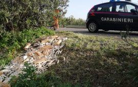 Uta: abbandonati in cunetta scarti di macellazione e cibi scaduti