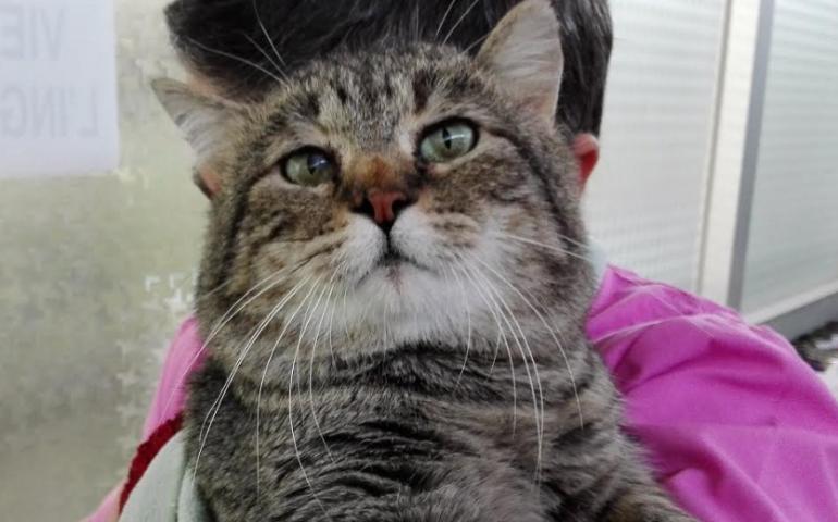 Gatto Mufasa: uno sguardo da duro ma un cuore dolcissimo. Recuperato dalla strada malato, ora cerca casa