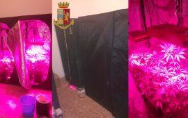 Assemini, una serra di marijuana a casa della fidanzata: arrestato un 32enne