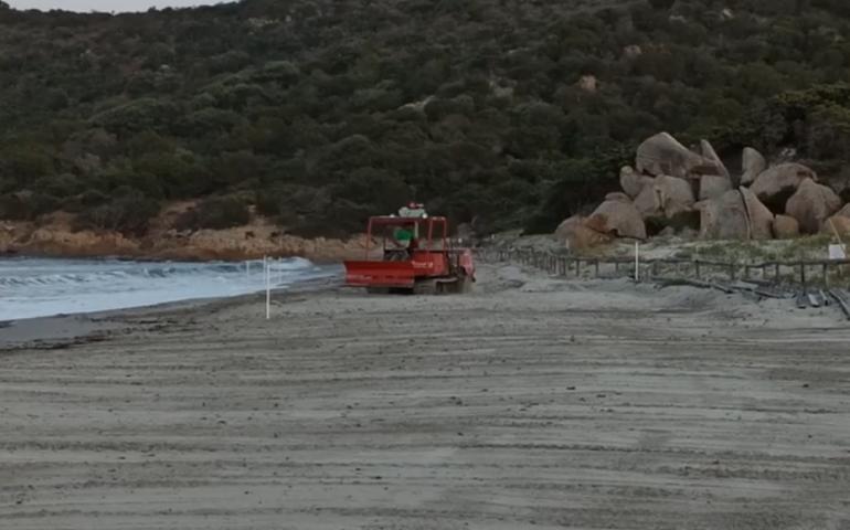 Villasimius: una ruspa cingolata sulla spiaggia protetta di Porto Giunco, la denuncia del GrIg