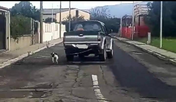 Terralba: cane legato a un'auto in movimento. Sul web scatta la polemica