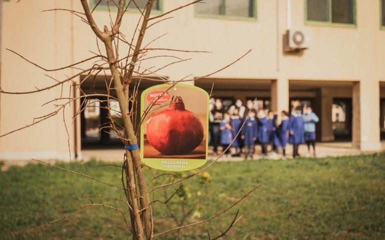 Donati alle scuole di Cagliari alberi di melograno, fioriranno in primavera