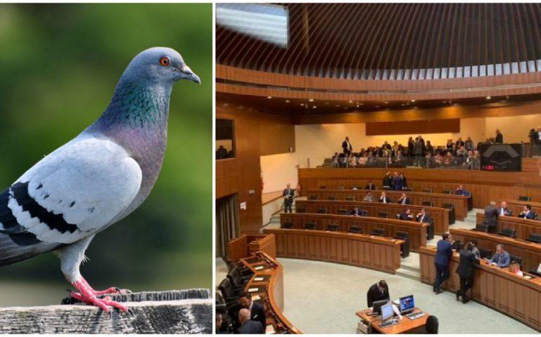 Grig: «La Regione pensa alle leggi sulla caccia, in qualerealtà parallelavivono i nostri legislatori?»
