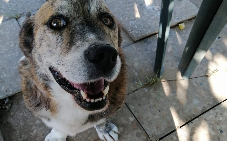 «Aiutateci a trovare un terreno per i cani», il rifugio Mimì&Gogò costretto a traslocare