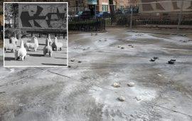 statue-nivola-distrutte-new-york