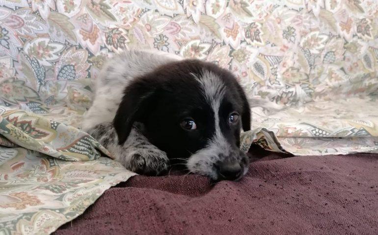 """Cuccioli massacrati a Nuoro, una bella notizia: c'è una sopravvissuta, ma """"ancora i suoi occhi non riescono a dimenticare"""""""