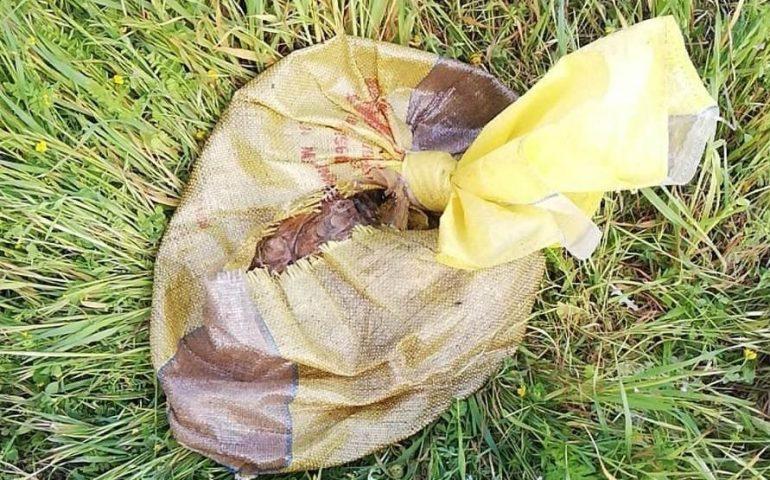 Sardegna: quattro cuccioli strappati alla mamma e brutalmente abbandonati dentro a un sacco. Due sono morti